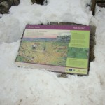 The interpretation panel peeking out of the snow!